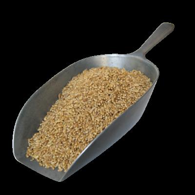 Whole Wheat - 500g Bag