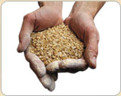 Malts And Grains