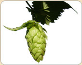 Hops And Additives